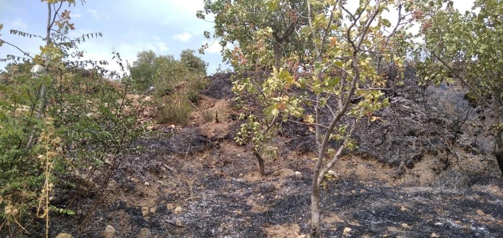 Siirt'te ağaçlık alanda yangın: Fıstık ağaçları zarar gördü
