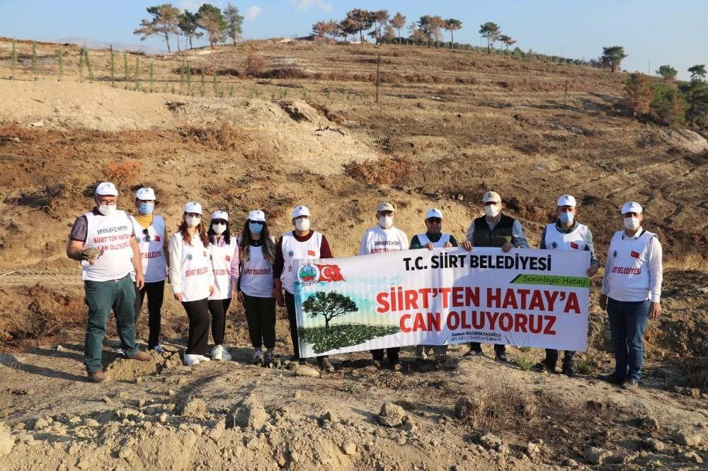 Siirt Belediyesi, Hatay'da PKK'nın yaktığı ormanda fidan dikti