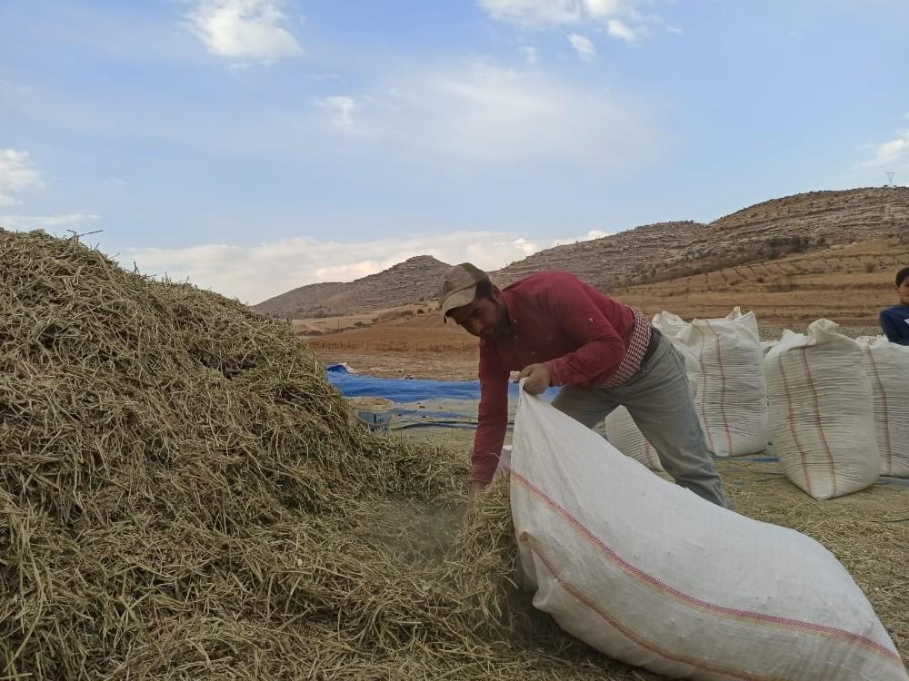Siirt'te fıstık atığı birçok ailenin geçim kaynağı oldu