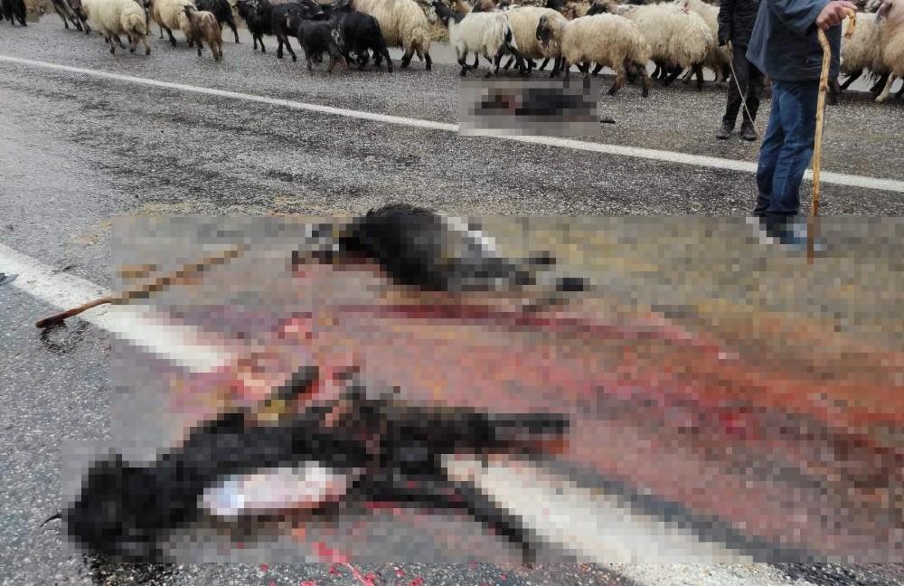 Siirt'te kamyon koyun sürüsüne daldı, 4 hayvan telef oldu