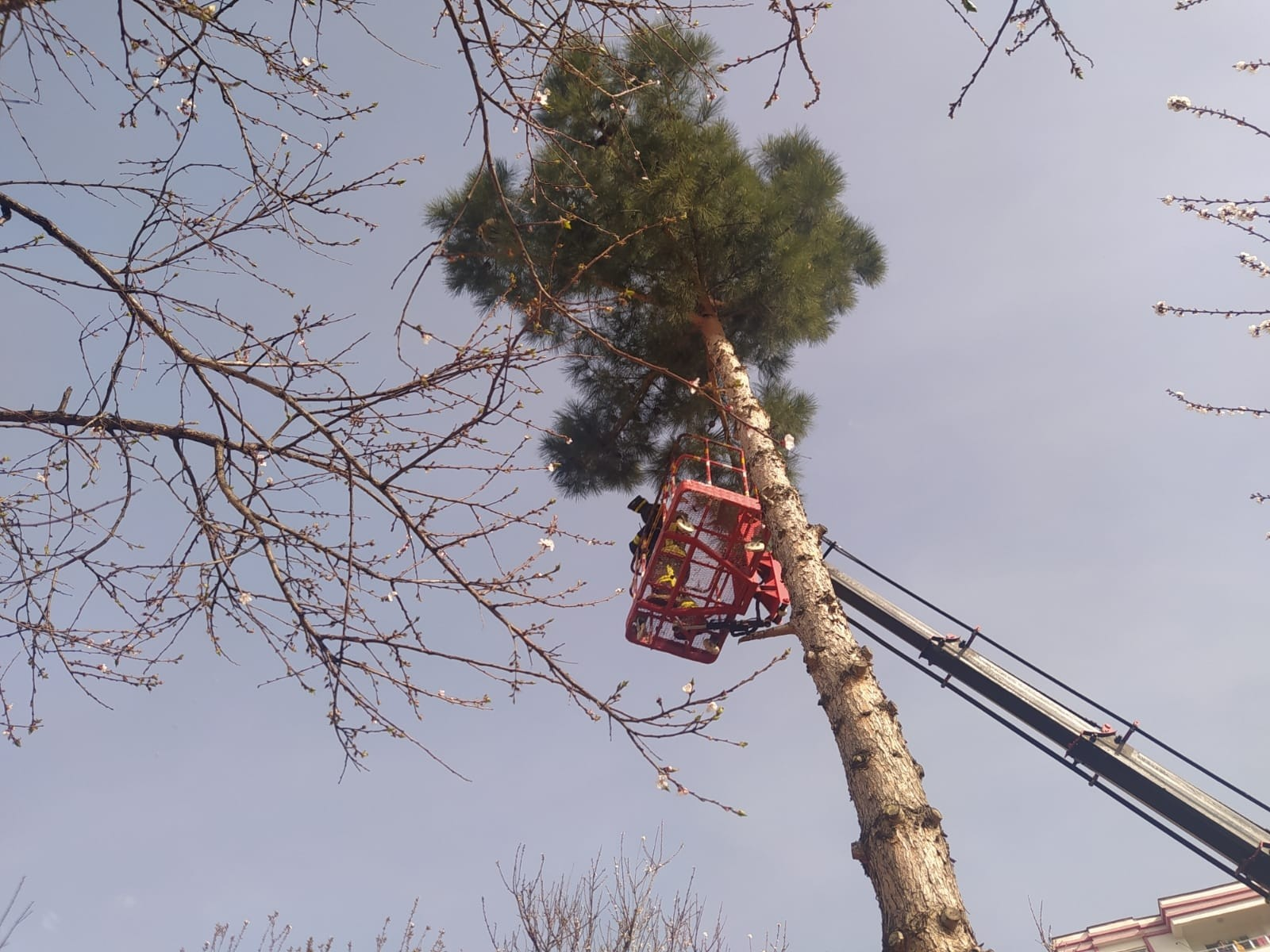 Siirt'te ağaçta mahsur kalan kediyi itfaiye ekipleri kurtardı