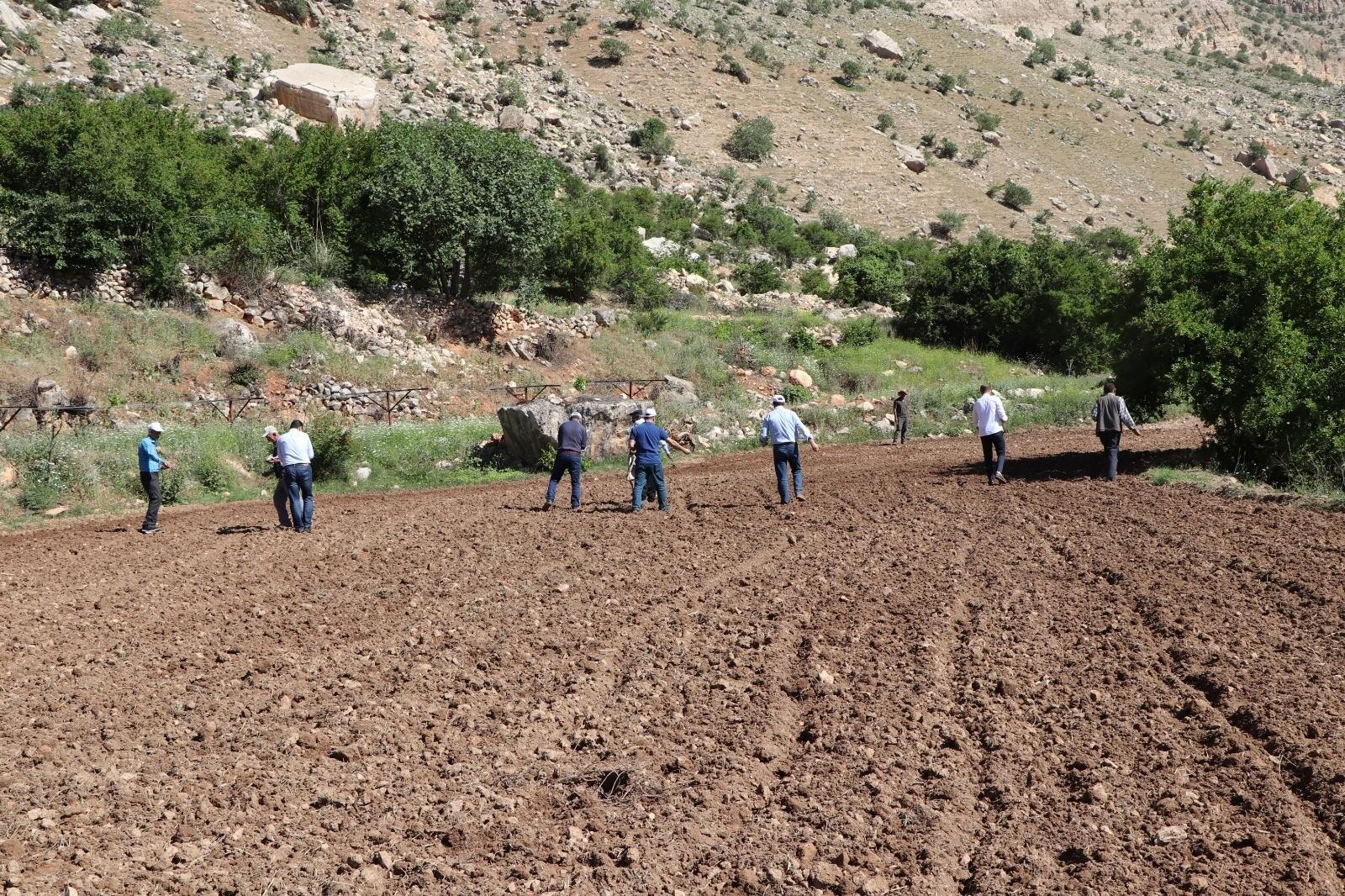 Siirt'te susamları toprakla buluşturan çiftçinin yüzü güldü