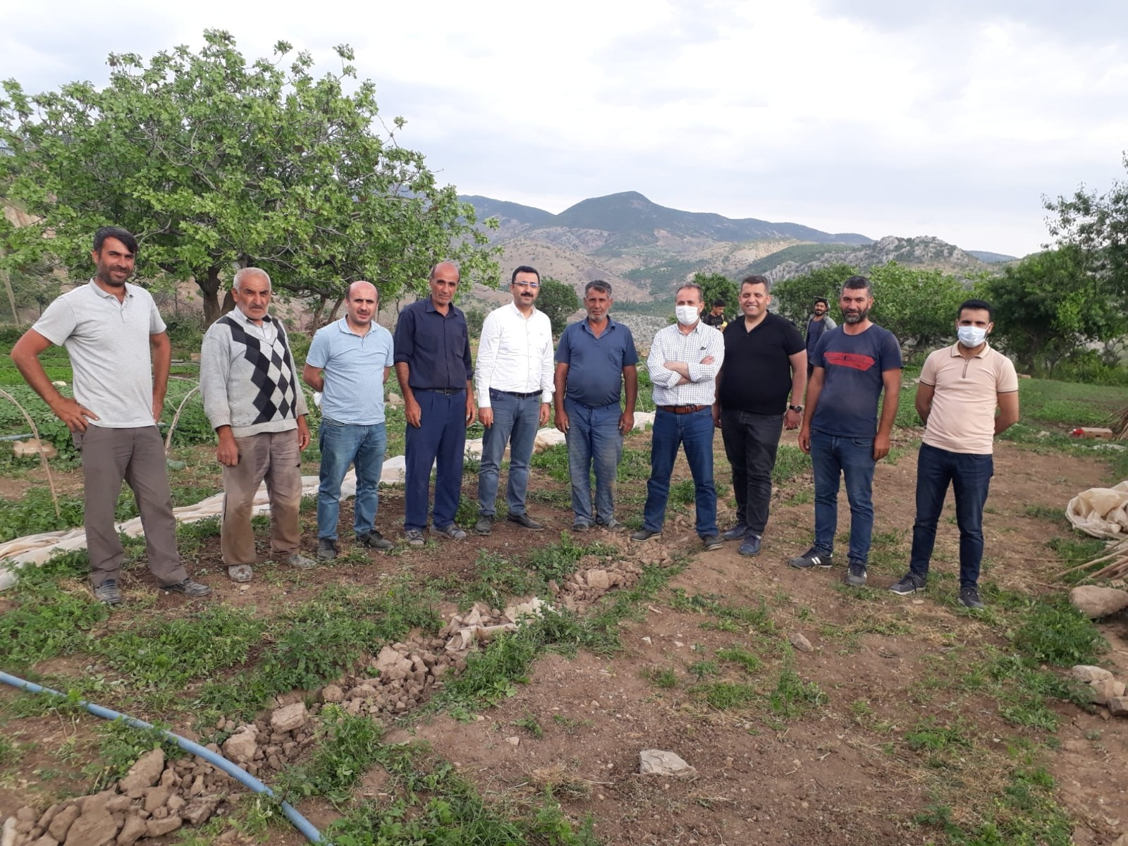 Siirt'ten 3 bölgeye 20 milyon sebze fidesi gönderildi